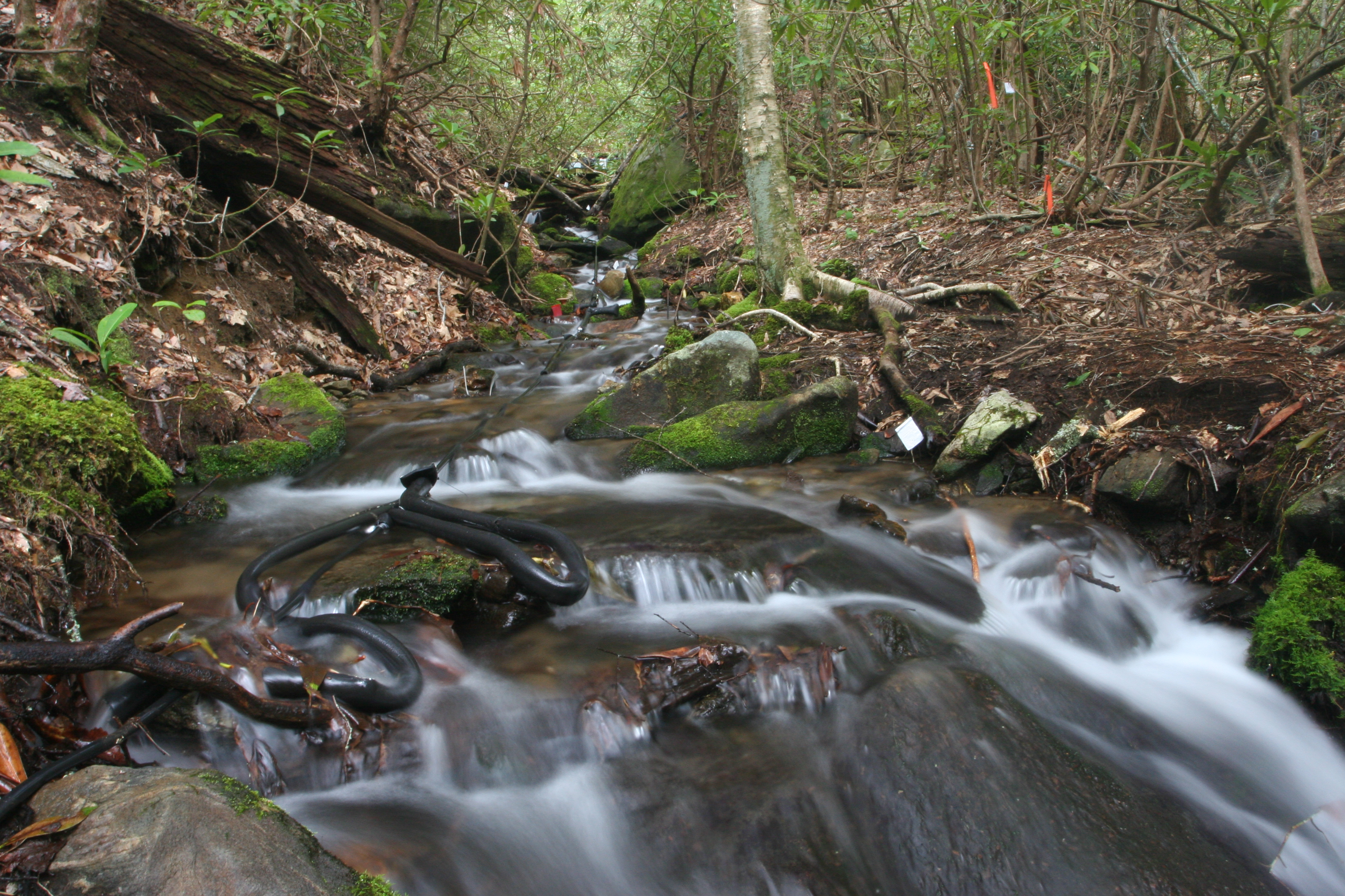 A stream at Coweeta