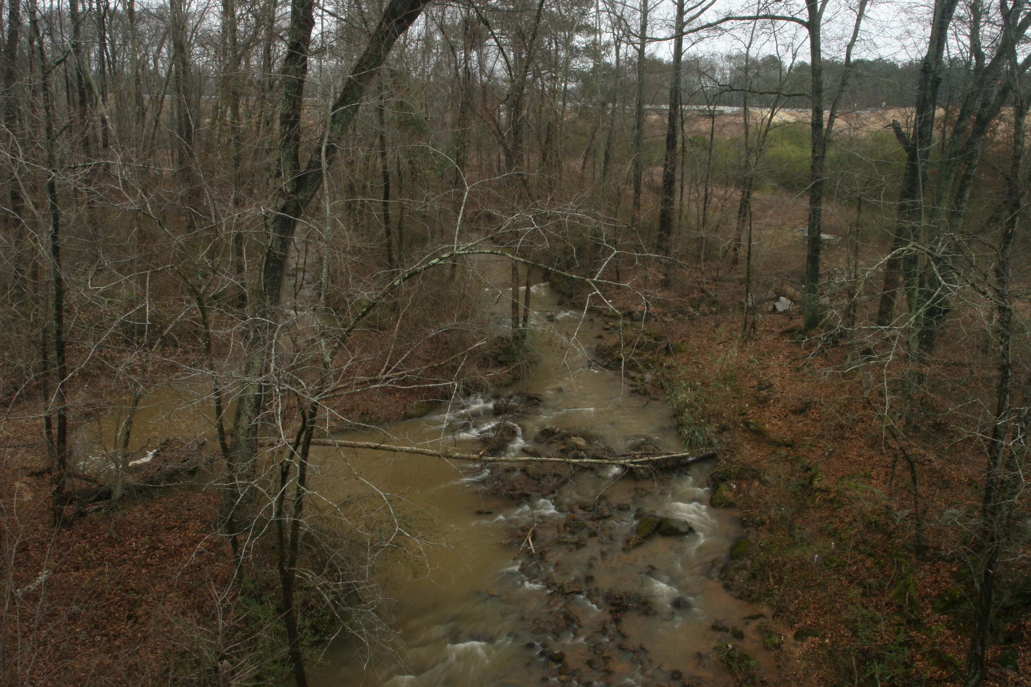 Trail Creek in Athens after rain