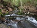A stream at Coweeta