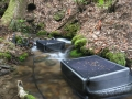 salamander enclosures