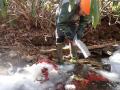 Retrieving litter bags from frozen streams!